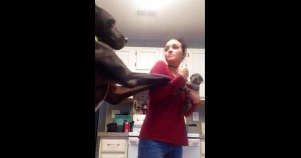 Ο τεράστιος σκύλος βλέπει για 1η φορά την ιδιοκτήτριά του αγκαλιά με ένα μικρο κουτάβι. Η αντίδρασή του; Έχει ρίξει το ίντερνετ!