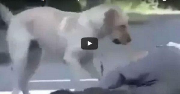 ΕΚΠΛΗΚΤΙΚΟ: Το αφεντικό του σκύλου προσποιείται ότι λιποθυμάει. Η αντίδραση του σκύλου μας άφησε άφωνους [βίντεο]