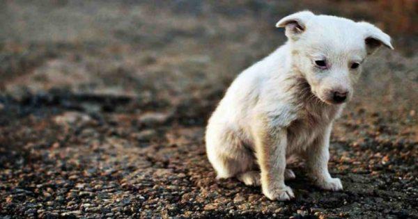 Συγκλονιστικό βίντεο: Δείτε πως αντιδρά αυτό το σκυλάκι που δέχεται χάδι για πρώτη φορά!