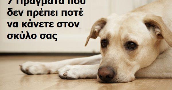 7 Πράγματα που δεν θα πρέπει ΠΟΤΕ να κάνετε στον σκύλο σας. Το #4 είναι το πιο Σημαντικό!