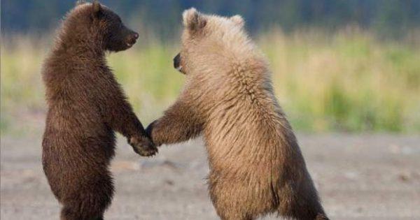 Δύο αρκουδάκια έκαναν βόλτα στο κέντρο της Καστοριάς