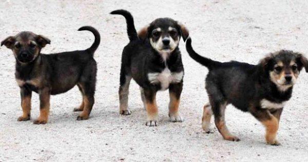 Ο νόμος 4039 / 12 και οι υπεύθυνοι για τα αδέσποτα ζώα