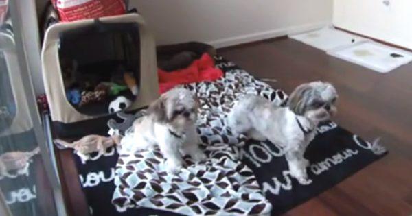 Δείτε τις αντιδράσεις των ζώων όταν προαισθάνονται τους σεισμούς (βίντεο)!
