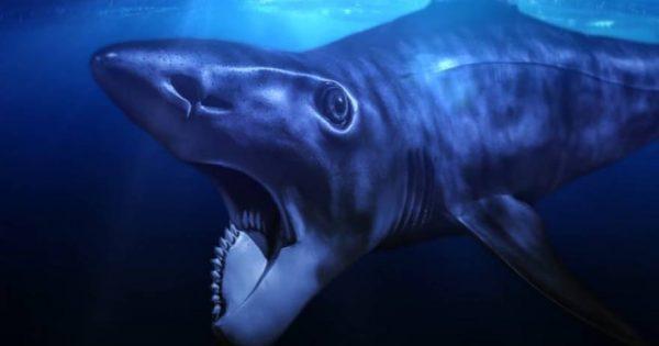 Αυτά είναι τα πέντε πιο παράξενα προϊστορικά πλάσματα (βίντεο)
