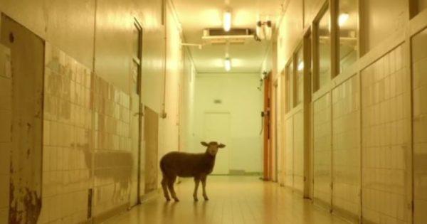 Μια ταινία-γροθιά στο στομάχι: Προσοχή, τα ζώα στην ταινία αυτή πεθαίνουν πραγματικά!
