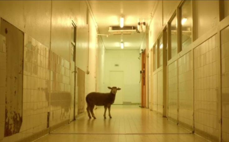 animal-735x457