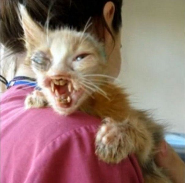 κακοποίηση ζώων γατάκι