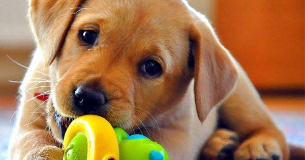 9 τρόποι για να σώσετε τη ζωή του σκύλου σας από μία επίθεση