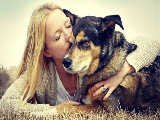 φροντίδα κατοικίδια ζώα
