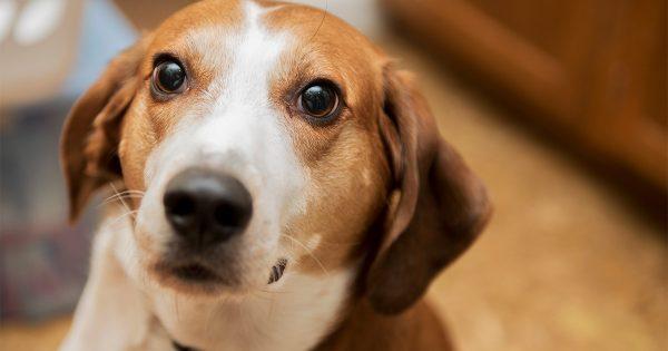 Η γλώσσα σώματος των σκύλων και ο τρόπος επικοινωνίας τους