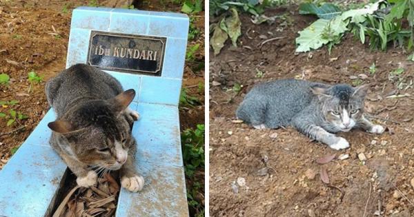 Από τότε που πέθανε η ιδιοκτήτριά της, αυτή η γατούλα αρνείται να φύγει από τον τάφο της.