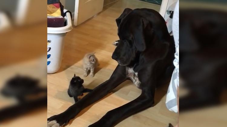 Σκύλος γατάκια