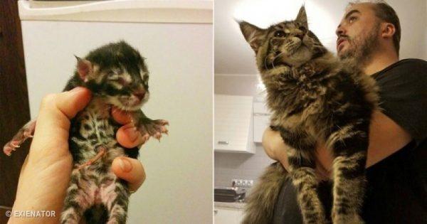 15 εκπληκτικές πριν και μετά φωτογραφίες από γατάκια που μεγάλωσαν και έγιναν γάτες!