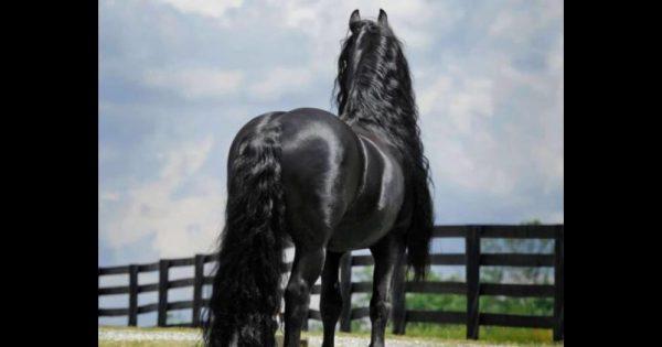 Από πίσω μοιάζει με ένα συνηθισμένο άλογο. Μόλις όμως γυρίσει από μπροστά; Προσέξτε την χαίτη του!