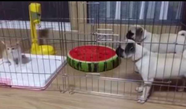 Σκύλος σκύλοι κλουβί Γάτα