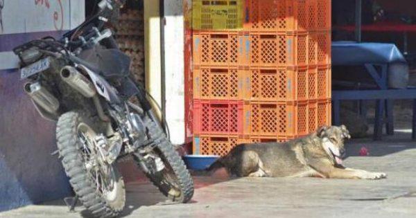 Σκύλος επιστρέφει εκεί που έχασε τη ζωή του το αφεντικό του εδώ και πέντε χρόνι
