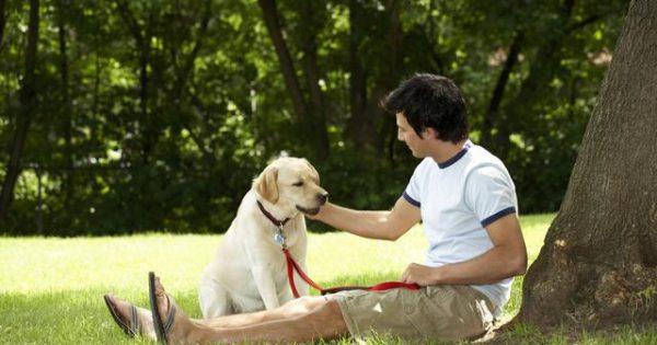Μήπως δεν πρέπει να υιοθετήσεις σκύλο;