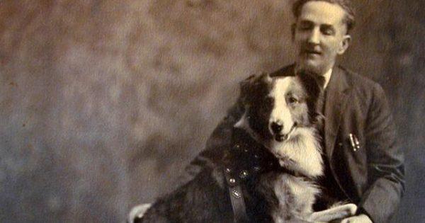 Σκυλιά που έγραψαν ιστορία – Διένυσε 4800χλμ για να γυρίσει σπίτι! (εικόνες, βίντεο)