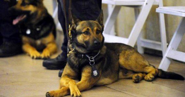 Στη «σύνταξη» βγαίνει ο Έλληνας σκύλος-ανιχνευτής ναρκωτικών Ντιέγκο