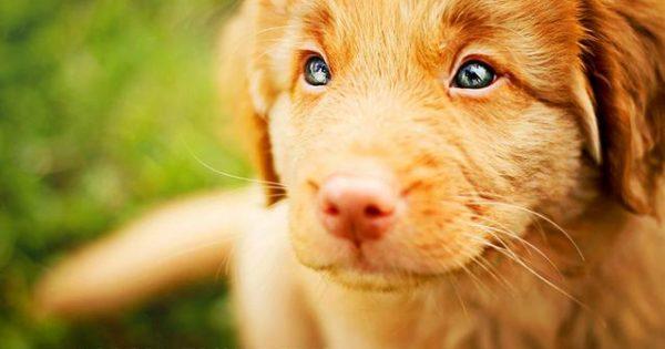 Ο σκύλος μου άλλαξε απότομα συμπεριφορά – Τι μπορεί να φταίει;