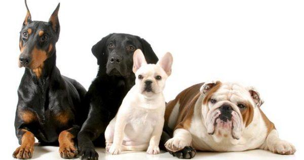 Ο σκύλος σας μάλλον θυμάται όλα τα καλά αλλά κακά πράγματα που κάνατε…