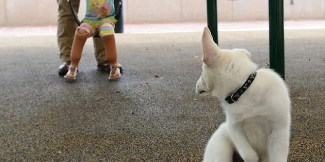 σκυλάκι παιδί κουτσό σκυλάκι ανάπηρο παιδί