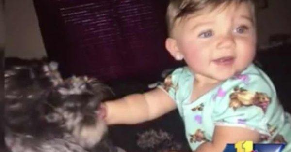 Ο σκύλος της οικογένειας θυσίασε τη ζωή του για να σώσει το μωρό από τη φωτιά!