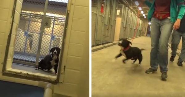 Σκύλος πριν την ευθανασία του δεν μπορεί να συγκρατήσει την χαρά του όταν μαθαίνει ότι θα τον υιοθετήσουν!