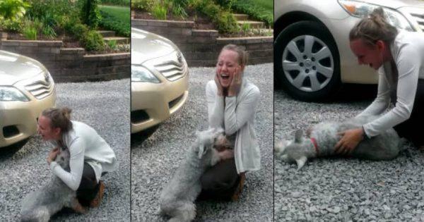 Σκύλος είδε το αφεντικό του μετά από 2 χρόνια και … λιποθύμησε από την χαρά του (βίντεο)