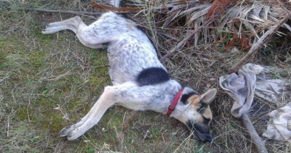 Χαλκιδική: Κτηνώδης συμπεριφορά από αγνώστους που σκότωσαν τα αδέσποτα σκυλιά με φόλες (φωτό)