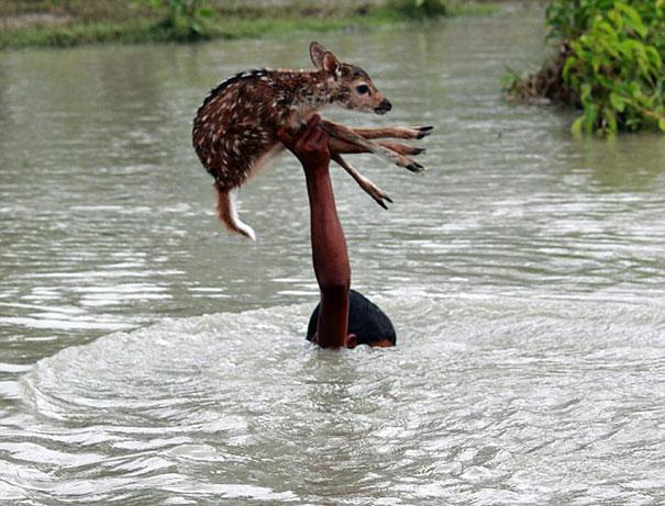 Μπανγκλαντές ελαφάκι διάσωση ζώων