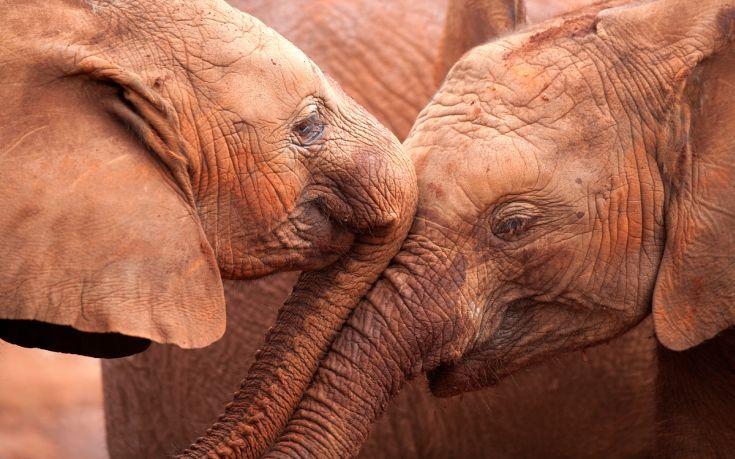 εξαφάνιση ζώων WWF
