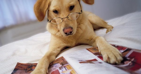 Ζώα που είναι πιθανότατα πιο έξυπνα από μας
