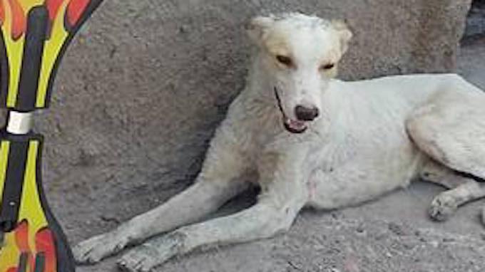 αδέσποτο σκυλί αδέσποτο Αδέσποτα