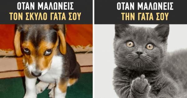 13 φωτογραφίες που αποδεικνύουν ότι οι σκύλοι και οι γάτες είναι από διαφορετικούς κόσμους
