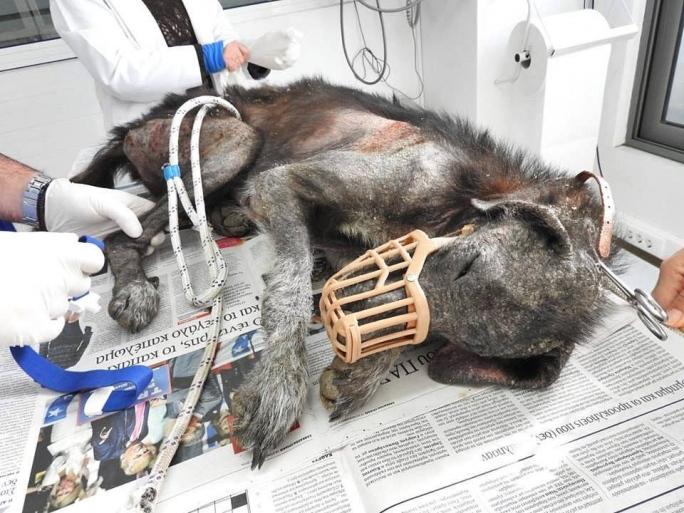 σκυλίτσα κακοποίηση σκύλων Αδέσποτος σκύλος Αδέσποτα