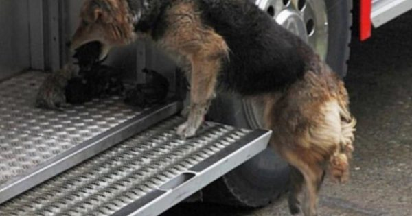 Σκυλίτσα βγαίνει εξουθενωμένη από το φλεγόμενο σπίτι. Μόλις οι πυροσβέστες είδαν τι έχει στο στόμα της, ανατρίχιασαν!