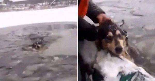 Η συγκλονιστική στιγμή που δύο περαστικοί σώζουν έναν σκύλο που πνίγεται στη παγωμένη λίμνη!