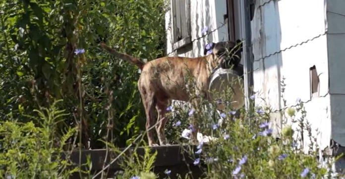Αδέσποτος σκύλος αδέσποτο Αδέσποτα