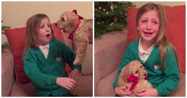 Ευχήθηκε να μεταμορφωθεί σε αληθινό το λούτρινο σκυλάκι της. Η αντίδρασή της όταν πραγματοποιήθηκε η επιθυμία της; ανεκτίμητη!