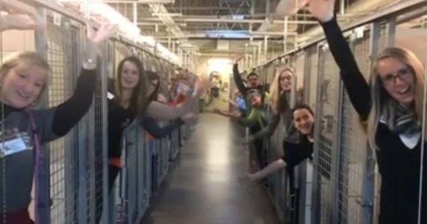 Υπάλληλοι σε καταφύγιο ζώων μπήκαν μέσα στα κελιά και άρχισαν να πανηγυρίζουν. Ο λόγος; Θα σας φτιάξει τη μέρα!