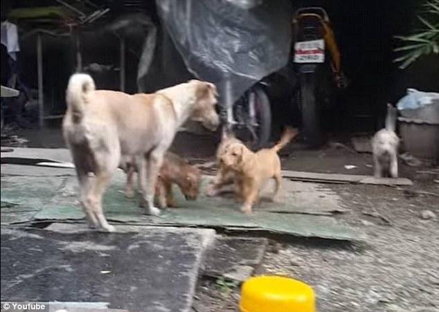 σκυλίτσα Αδέσποτα