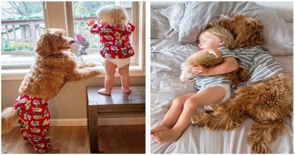 Οι θετοί γονείς νόμιζαν πως το υιοθετημένο παιδί τους δεν θα προσαρμοστεί ποτέ, μόλις όμως συνάντησε το σκύλο τους το «θαύμα» έγινε.