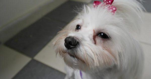 Η φατσούλα του σκύλου σου έχει λεκέδες από δάκρυα; Μάθε γιατί και πώς να το διορθώσεις!