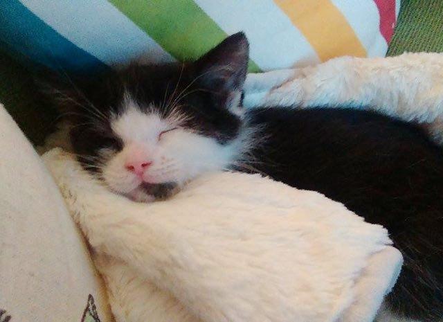κτηνίατρος γατάκι