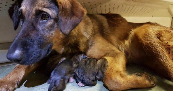Μόσχα: Επιβάτες του μετρό βοήθησαν σκυλίτσα να γεννήσει οκτώ κουτάβια!