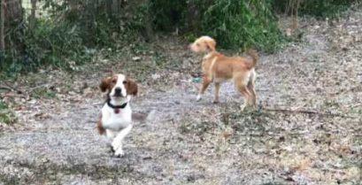 Τι γίνεται όταν δύο σκύλοι βλέπουν χιόνι για πρώτη φορά