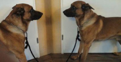 Ο σκύλος τα βάζει με τον καθρέφτη