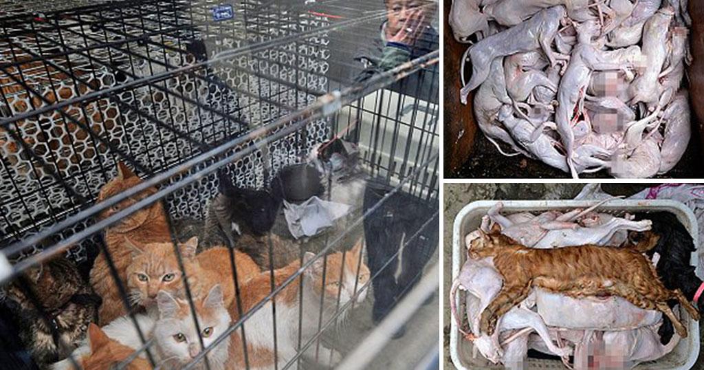 κακοποίηση ζώων