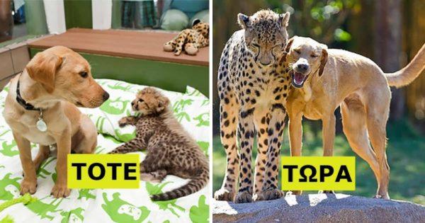 22 Υπέροχες φωτογραφίες ζώων που μεγάλωσαν μαζί και έγιναν αχώριστοι φίλοι. Η 4η θα σας συγκλονίσει!
